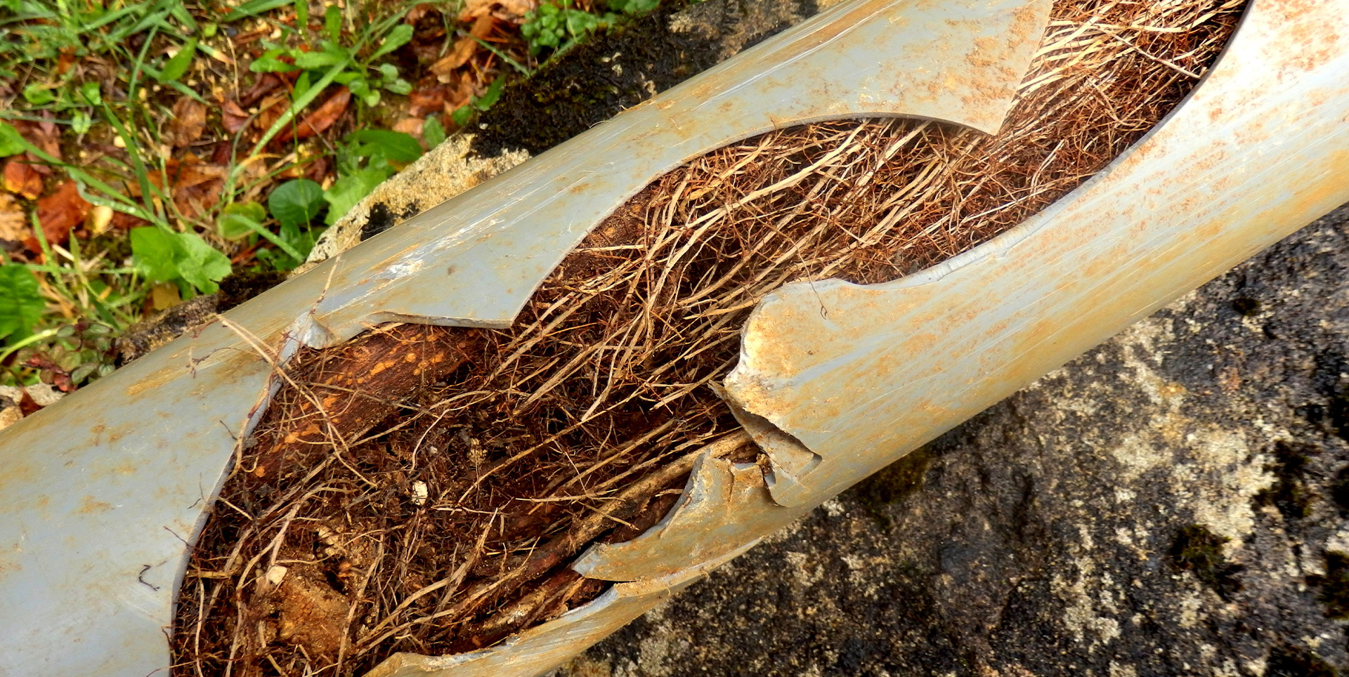 Draincall Root Cutting